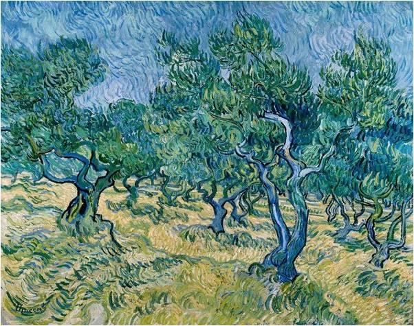 415-2-oliveraie-van-go